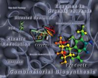 Biocatálisis